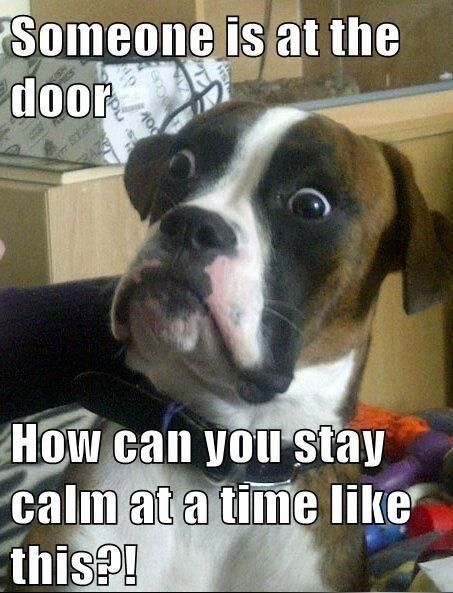 c564c88434d7ca4a53a827d69ca26bfa--funny-dog-stuff-dog-jokes-meme.jpg